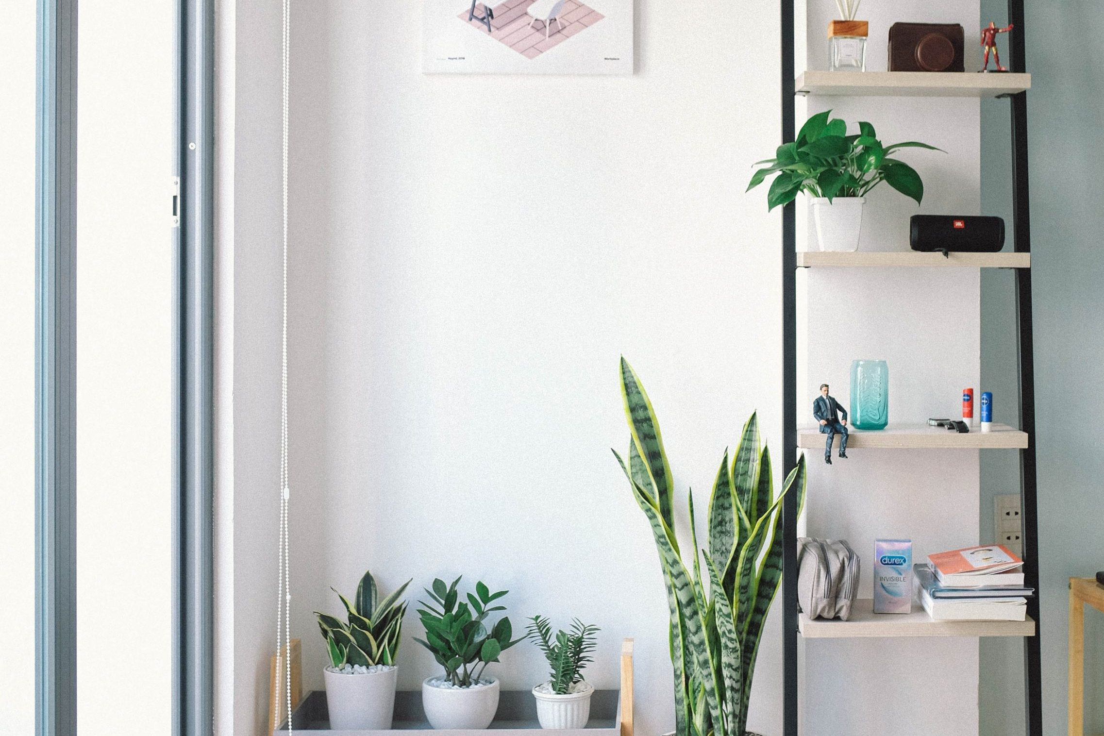 5 Indoor Plants That Will Purify and Beautify Your Home